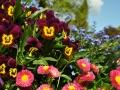 Blumenpracht im Sonnenschein