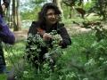 Kräuterfee Tina sammelt Blüten