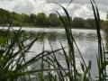 Falkenhagener See mit Pflanzen