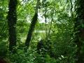 Falkenhagener See Waldimpressionen