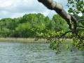 Falkenhagener See Blick auf das Wasser mit Ast