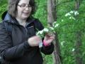 Kräuterfee Tina Erklärung mit Pflanze