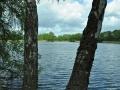 Falkenhagener See Baumblick