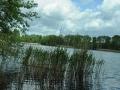 Falkenhagener See Schilfblick