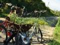 Wildkraeuter_Wanderung_Fahrrad_Delikatessen_am-Wegesrand_14