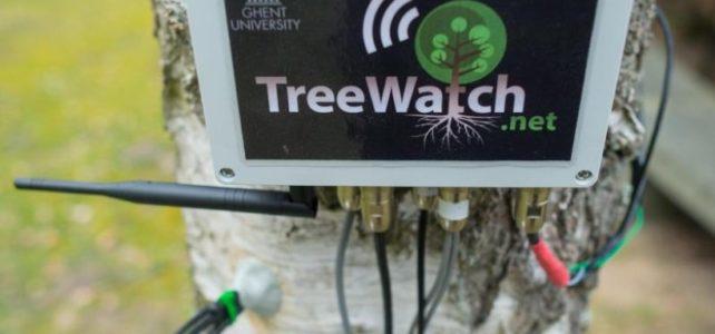 Ein Baum twittert: ich habe Durst